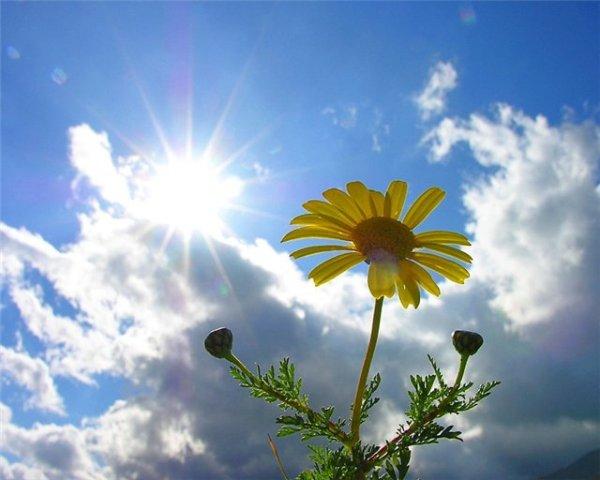 summer_sun